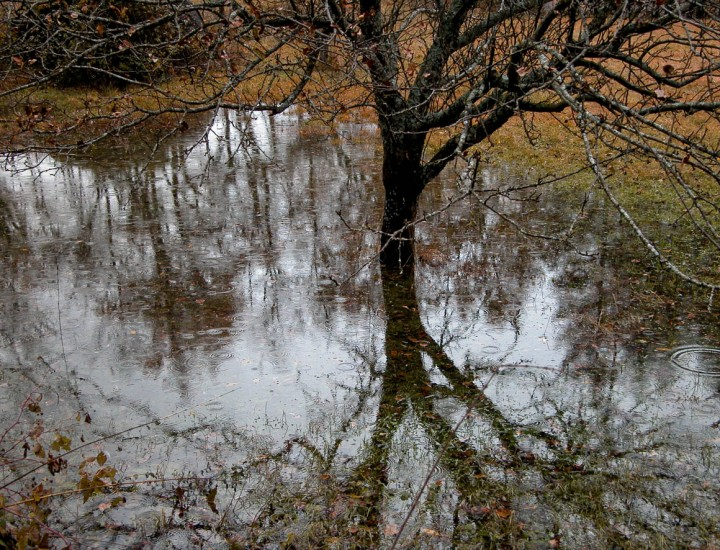 L'albero e il campo allagato