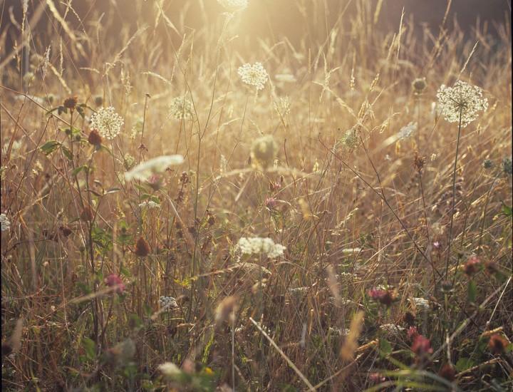 La luce nel campo