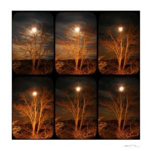 L'acacia