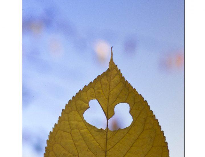 L'illusione pareidolitica / Due foglie a distanza di dieci anni