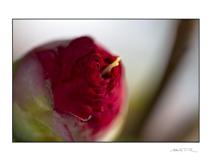La meraviglia nell'osservare un fiore