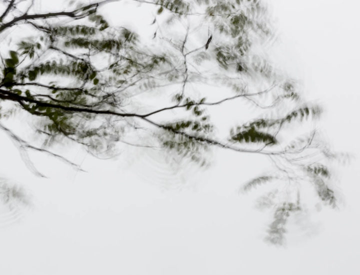 Di foglie, di nebbia e di vento